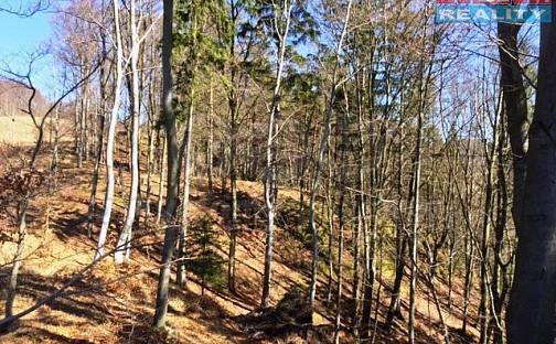 Prodej lesa, 23760 m², Kounov, okres Rychnov nad Kněžnou