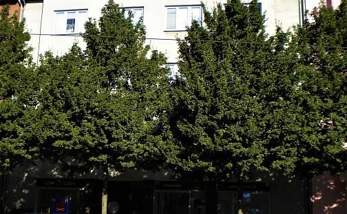 Pronájem bytu 1+1, 40 m², Wolkerova, Olomouc - Nová Ulice